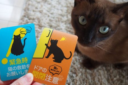 愛猫の安全を守るおしゃれなドアステッカー